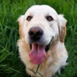 7 Tips For Teaching Kids About Dogs